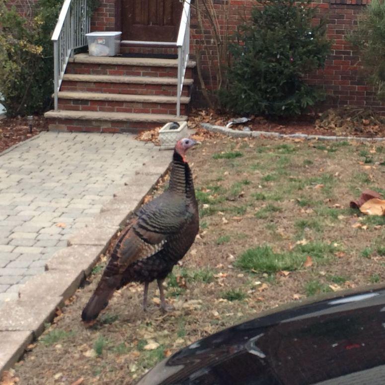 1.17 turkey